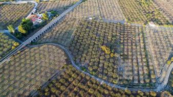Agricultura-Zenit-Drones